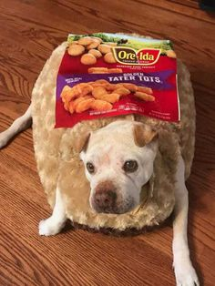 Dog named potato dressed up as a tater tot in a funny dog costume Cute Dog Halloween Costumes, Best Dog Costumes, Pet Costumes, Costume Ideas, Cute Funny Dogs, Funny Dog Memes, Funny Animal Memes, Cute Funny Animals, Dog Humor
