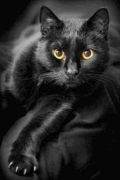 černá pot kočička