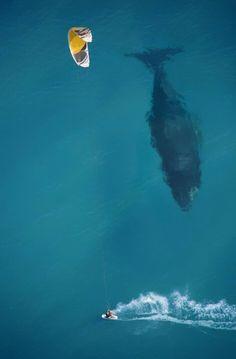 Whale vs surfer