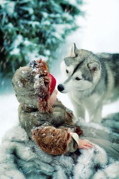 The shock of red surrounded by white and fur looks like an open wound that the wolf is smelling. This is not a wolf, but a Siberian Husky. The original editor should have known the difference so that neither breeds get a bad rep. Love My Dog, Husky Tumblr, Animals Beautiful, Cute Animals, Wild Animals, My Husky, Cat Dog, Alaskan Malamute, Malamute Husky