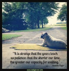 Boxer Dog Love! This quote is deep..