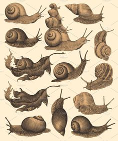 Editable vector illustrations made in the style of vector engraving. Set contains AI files, files, high quality JPEG files, high quality PNG files with Animal Drawings, Art Drawings, Snail Tattoo, Pet Snails, Snail Art, Frog Illustration, Desenho Tattoo, Art Reference Poses, Design Set