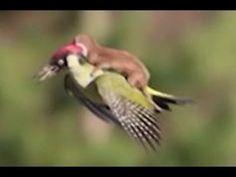 動物の感動愛情物語ですね!動物にも人間と変わらない・・・イヤもしかしたら人間以上の温かい心があるのかも・・・!とにかくビックリ感動です!【感動する話】 関連動画…