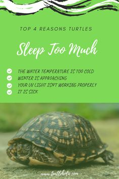 Turtles like to sleep a lot. But did you know that if your turtle is always sleeping, there may be something wrong with either your habitat or your turtle? Turtle Care, Pet Turtle, Turtle Habitat, Tortoise Habitat, Pet Care Tips, Pet Tips, Dog Care, Red Eared Slider Turtle, Kawaii Turtle