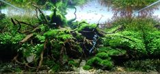 ceed in action: our favourite European scaper took away the German Aquascaping Contest grand prize with his 230l tank, called Refuge.