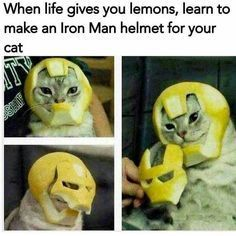 This cat is going places... once he gets the full suit. | Follow @gwylio0148 or visit http://gwyl.io/ for more diy/kids/pets videos