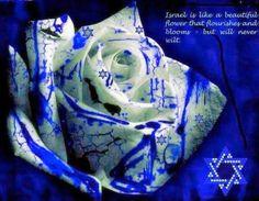 Israel is like a beautiful flower… #israel #jewish #judaism #iloveisrael