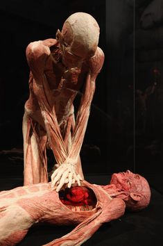Plastinated human corpses posed to look like one is giving first aid to the other stand on display at the Body Worlds exhibition on April 26, 2011 in Berlin, Germany. The exhibition, which features human and animal corpses plastinated by Gunther von Hagens, focuses on the role of the heart. It will be open to the public at the Postbahnhof from April 27 to August 14.