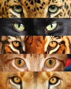 Wallpaper Of Cute Animals Baby Cat Eyes Drawing, Big Cat Family, Animals And Pets, Cute Animals, Classe D'art, Gato Grande, Big Cat Rescue, Eye Photography, Domestic Cat
