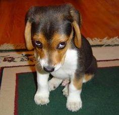 imagenes tiernas fotos perritos