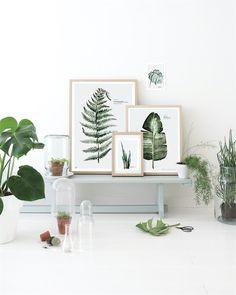 Botanic Prints   Ross & Brown online designer home store