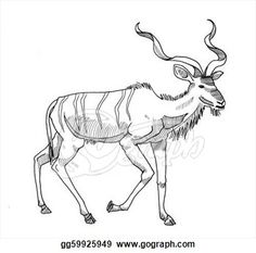 Charming Stock Illustration   Kudu Walking. Clipart Drawing Gg59925949 .