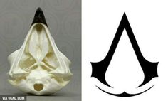 It's actually modeled after an eagle skull :D