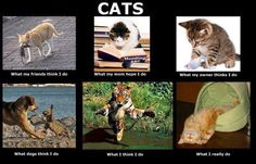 truth bout kitties