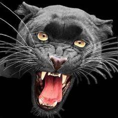 SNARLING BLACK PANTHER photo snarling-panther.jpg
