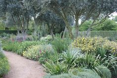 A Garden You Water Four Times a Year : Gardenista...olives underplanted w/DT perennials, shrubs & herbs.