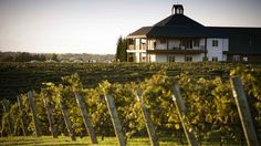 These 10 Beautiful Wineries And Vineyards In North Carolina Are A Must-Visit For…