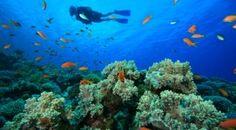 Top 5 Dive Destinations for Couples