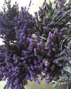 If you can imagine how amazing these smell, the relaxation will just take over…