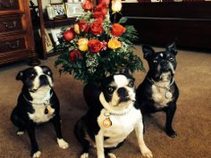 "WagAware Ambassadors Josie, Sadie and Jax saying Happy Valentines Day from New Jersey: ""we'd like to share our Mom's flowers with all the Mom's today. We also always wear our WagAware Charms because we are Ambassadors to those dogs who do not have a voice! Wag-on everyone!!!"" Well said!"
