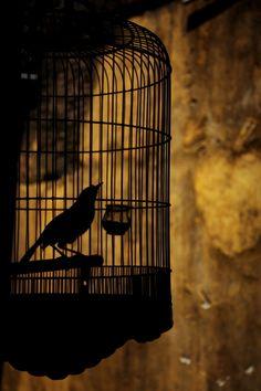"calmapparente:    ""In a cage"" by Tashi Delek"