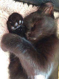 winterschlaf ;-)))  black cat sleeping