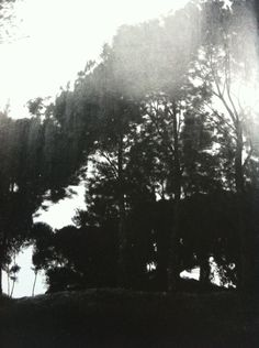 Black, white, gray, trees
