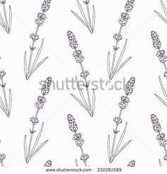 Hand drawn lavender branch and flowers outline seamless pattern. Doodle drawing spicy herbs. Kitchen background. Hand drawn seasoning. Vector illustration
