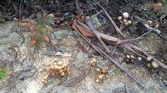 Paisaje senda del río Troncoso Plants, Scenery, Plant, Planets