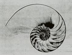 Nautilus Shell drawing by prospecttheater, via Flickr. trying to decide between greyscale or color for nautilus tattoo