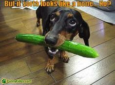 dachshund fun - Google search