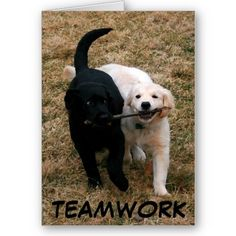 I want a black lab and a white lab :)