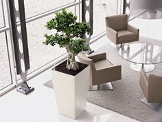 aerial shot of a indoor bonsai tree located in an customer waiting area officelandscapes bonsai tree office