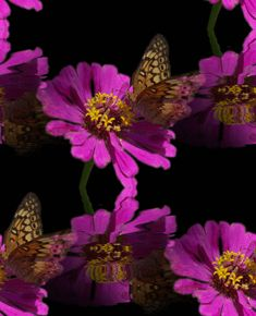 BUTTERFY AND FLOWER GIF | Flowers And Butterflies Background