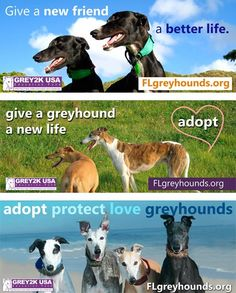 Promote greyhound adoption with one click of your mouse!  http://www.grey2kusa.org/eNEWS/G2K-040912.html