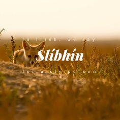 Slíbhín - Sly person | © Culture Trip