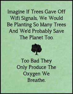 Wifi vs Trees