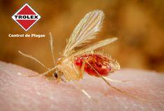 Deshacerse de los jejenes dentro y fuera del hogar  Los jejenes son moscas pequeñas pero en términos de apariencia se asemejan más a un zancudo que a una mosca.  Tenerlos en los alrededores puede ser una gran molestia, ya que se reproducen con rápidez, pican a las personas y  propagan enfermedades.  Son atraídos a las personas por el dióxido de carbono que emiten nuestros cuerpos, esta es la razón por la que se les ve volando alrededor de la boca y la nariz.