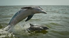 Bummer News of the Day: Dolphins Mysteriously Turning Up Dead In Droves