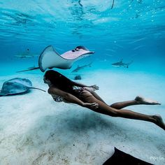 Underwater photography_ - adel home