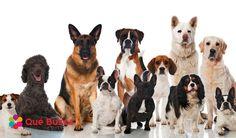 Si te encantan los perros, de seguro reconocerás algunas de estas razas más populares. ¿Se encuentra tu favorita?