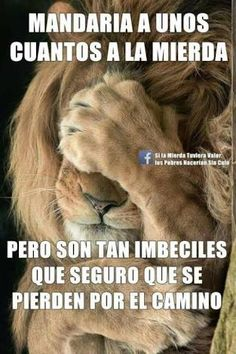 Tribe of JUDAH wake up. I AM, the ONLY name of the God of Abraham Isaac and Jacob given unto MOSES himself in Exodus unto ALL generations. Spanish Jokes, Funny Spanish Memes, Funny Phrases, Funny Quotes, Funny Memes, Memes Humor, Tribe Of Judah, Lion Of Judah, Christianity