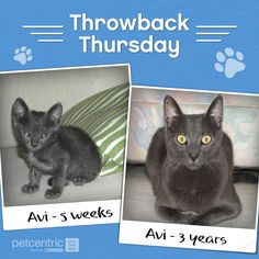 Repin if you wish your pet was still a #puppy or #kitten. #joyofpets