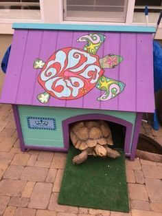 Heated Tortoise House