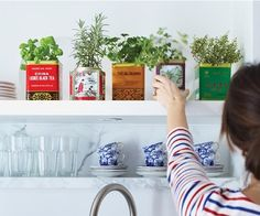 Kitchen herbs in old tea tins.