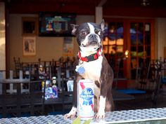 your pooch will be lapping up Pupst Blue Ribbon (read: water) and eating free treats at Diesel Filling Station Dog Friendly Hotels, Hot Dog Stand, Puppy Dog Eyes, Filling Station, Find Pets, Blue Ribbon, Dog Friends, Boston Terrier, Dogs And Puppies