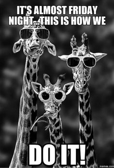 "55 ""Almost Friday"" Memes - ""It's almost Friday night...This is how we do it!"" Almost Friday Meme, Friday Memes, Tony Robbins, Roger Lannoy, Funny Animals, Cute Animals, Animal Memes, Persona Feliz, Funny Jokes"