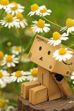 DANBO a,ongst the chamomile Danbo, Cardboard Robot, Box Robot, Amazon Box, Bulletins, Cute Box, Little Doll, Little Boxes, Toys Photography