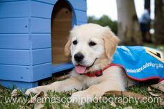 Brielle as a pup