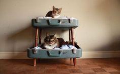 Ideas de camas para gatos baratas